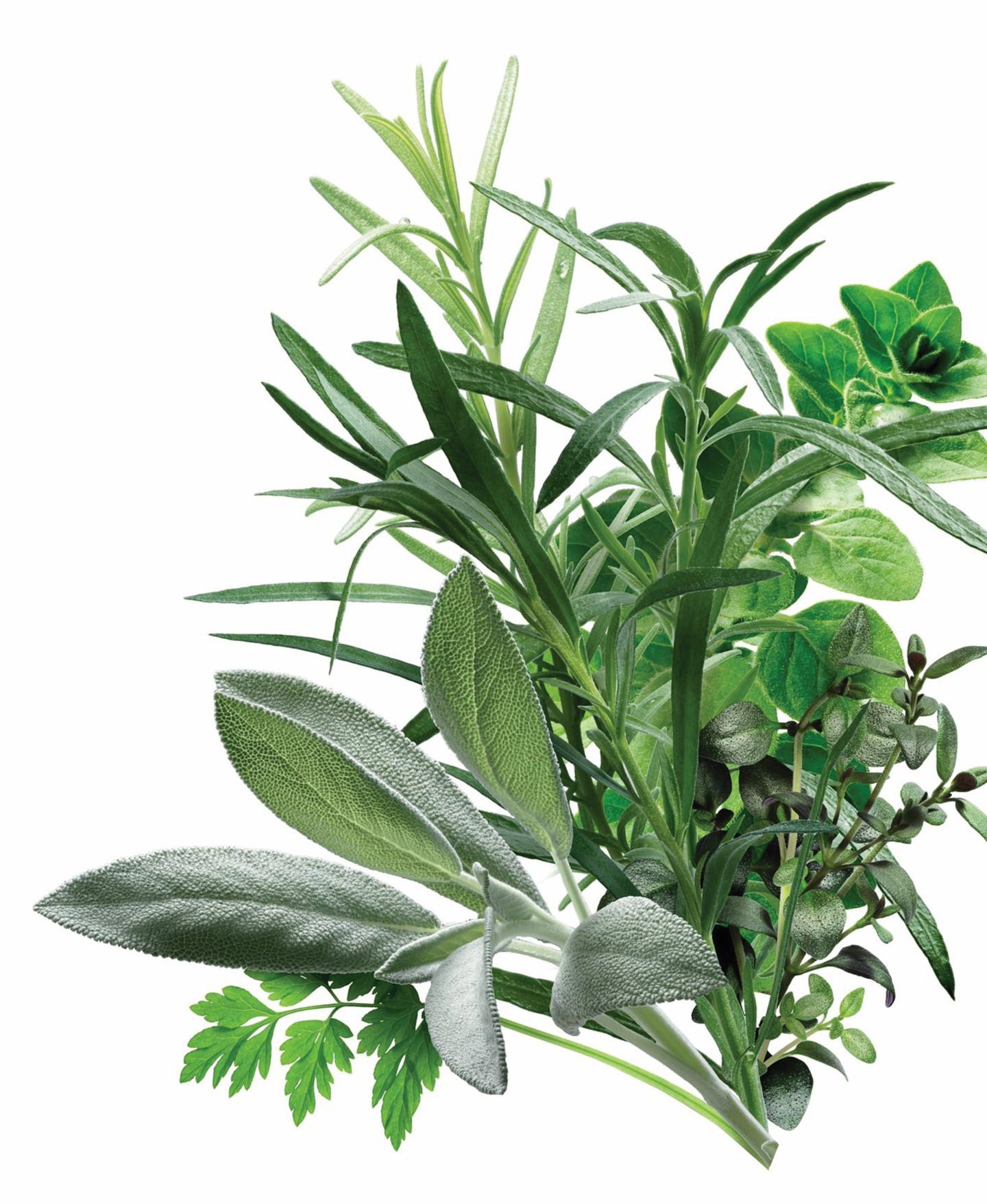 Herbal Medicine Services